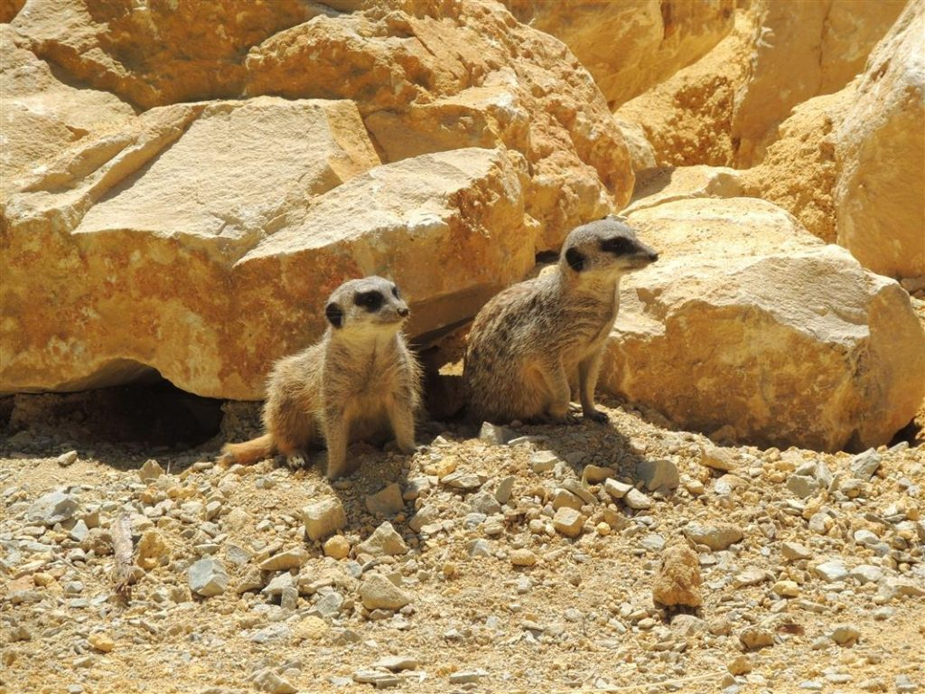 Le Zoo Planète Sauvage